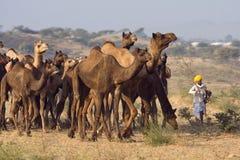 Pushkar Fair ( Pushkar Camel Mela ) Rajasthan, India Stock Image