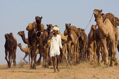 Pushkar Fair ( Pushkar Camel Mela ) Rajasthan, India Royalty Free Stock Images