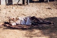 PUSHKAR, INDE - 16 janvier 2017 homme sans abri dormant sur le stree Images stock