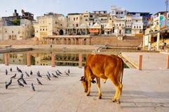 Pushkar, India Immagini Stock