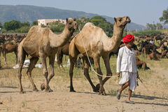 Pushkar, India. Stock Photography
