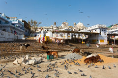 PUSHKAR, INDIA - JAN 07: Different activities on Lake of Pushkar on January 07, 2015. Agra is a town in the Ajmer district Stock Photo