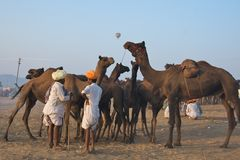 Pushkar, India - November 2011 Stock Afbeelding