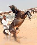 Pushkar fair. Royalty Free Stock Photos