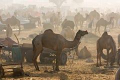 Pushkar, Indien. stockfotos