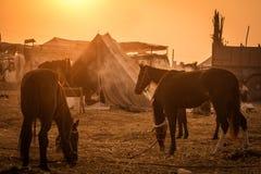 Pushkar-Kamel angemessenes 2014 Lizenzfreies Stockbild