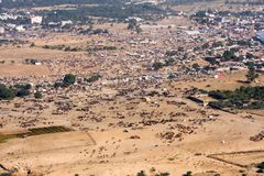 Pushkar-Kamel Mela, Pushkar-Kamel angemessen, Teerwüste, Indien Lizenzfreie Stockfotos