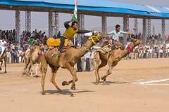 Pushkar kamel Mela (den ganska Pushkar kamlet) Arkivbild