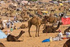 Pushkar kamel Mela (den Pushkar kamelmässan) Arkivbilder