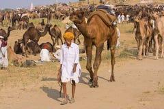 Pushkar Kamel Mela (Pushkar Kamel angemessen) Lizenzfreie Stockbilder