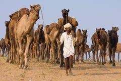Pushkar Kamel Mela (Pushkar Kamel angemessen) Stockfotos