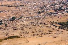 Pushkar-Kamel Mela (Pushkar-Kamel angemessen) Rajasthan, Indien Lizenzfreies Stockbild