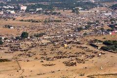 Pushkar-Kamel Mela (Pushkar-Kamel angemessen) Rajasthan, Indien Stockfotografie