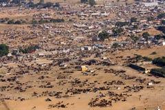 Pushkar-Kamel Mela (Pushkar-Kamel angemessen) Rajasthan, Indien Lizenzfreie Stockfotos