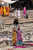Pushkar. Rajasthani colourful ladies . Drying cloths Lots of birds and cow sunny day Stock Photos