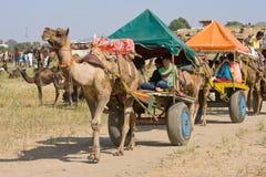Pushkar Wielbłądzi Mela (Pushkar Wielbłądzi jarmark) Zdjęcie Stock