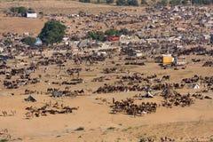 Pushkar Wielbłądzi Mela (Pushkar Wielbłądzi jarmark) Obrazy Royalty Free