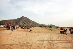 Pushkarwoestijn met kamelen en voertuigen stock fotografie