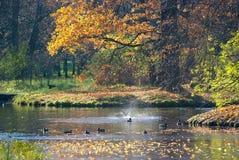 pushkin selo tsarskoye 圣彼德堡 俄国 凯瑟琳公园 免版税图库摄影