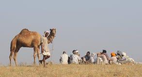 Puskar Camel Fair Royalty Free Stock Photos