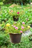 Pusley blommor royaltyfri foto