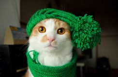 Puss στο πράσινο καπέλο Στοκ Φωτογραφία