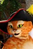 Puss en cargadores del programa inicial Fotografía de archivo libre de regalías