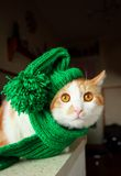 Puss in green hat Royalty Free Stock Photography