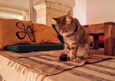 Puss in laarzen Royalty-vrije Stock Foto