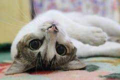 Puss lindo Imagen de archivo libre de regalías