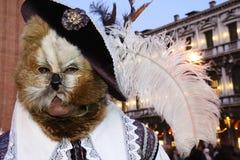 Puss nos carregadores Imagem de Stock Royalty Free
