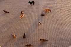 Pussies die op de stoep wachten royalty-vrije stock fotografie