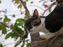 Pussy Cat Escape Another Cat upp trädet arkivfoton