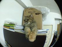 Pussy Cat by Fisheye. I use clip lens for smart phone Royalty Free Stock Photo