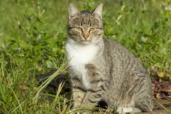 cat on a grass Stock Photography