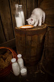 cat with milk Stock Photography
