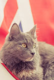 Pussy cat sitting on Union Jack Royalty Free Stock Photography
