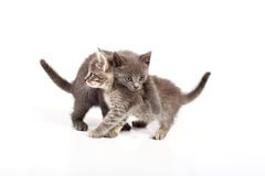 Cats. Over white background Stock Images