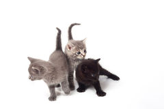 Pussy cats Royalty Free Stock Images