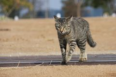 Pussy de kat op snuffelt rond! Stock Foto