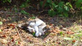 Pussy im Gartenstillstehen Katzen in der Natur stock footage