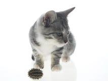 Pussy kat royalty-vrije stock foto