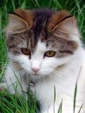 Pussy-Katze Portait lizenzfreie stockfotografie