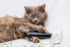 The is surrounded by money and holds the wallet in his paw stock photo