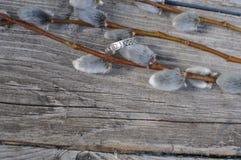 Pussy-wilg takken met een zilveren ring op een houten lijst Stock Afbeelding