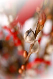 Willow. Is a plant for chinese New year decoration Royalty Free Stock Photo