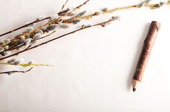 Pussy willow on border Stock Photo