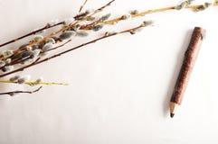 willow on border Stock Photo