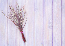 willow bunch Royalty Free Stock Photography