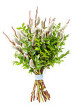 Pussy willow bunch for Palm Sunday Stock Image